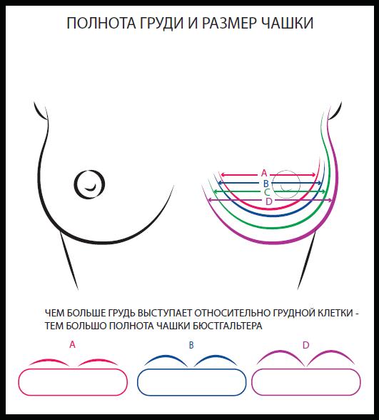 Как определить размер бюстгальтера - Полнота груди и размер чашки (А,В,С,D…)